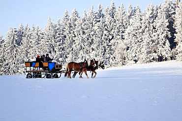 Horse-drawn sleigh ride in the wintery landscape in the Bavarian Forest near St. Englmar, Bavaria, Germany, Europe