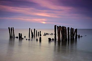 Groynes on the island of Sylt near Rantum in the winter evening light, Schleswig-Holstein, Germany, Europe