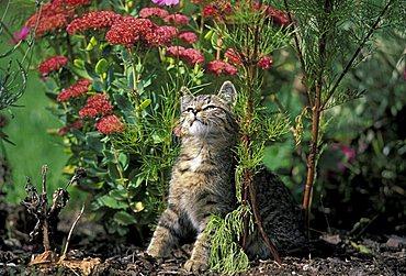 Cat between flowers