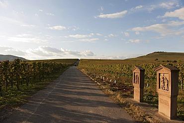 Vineyards of Trittenheim, Moselle, Rhineland-Palatinate, Germany, Europe