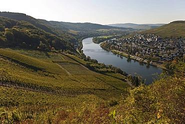 Kues district, Bernkastel-Kues, Moselle river, Rhineland-Palatinate, Germany, Europe