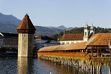 Kapellbruecke chapel bridge and Wasserturm water tower in front of the Jesuit church, Lucerne, Canton of Lucerne, Switzerland, Europe