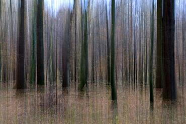 Blurred autumn forest in the Kurler Busch nature preserve, Dortmund, Ruhrgebiet area, North Rhine-Westphalia, Germany, Europe