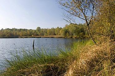 Venner Moor Naturschutzgebiet nature reserve, Muensterland region, North Rhine-Westphalia, Germany, Europe