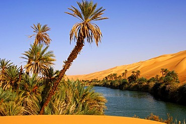 Palm trees on the shore of the Um el Maa lake in the Ubari Sand Sea, Sahara, Libya, Africa