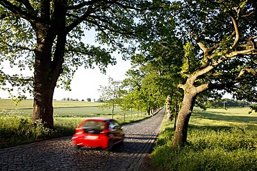 Country road, avenue, part of the Deutsche Alleenstrasse German Avenue Road, between Granitz and Putbus, Ruegen island, Mecklenburg-Western Pomerania, Germany, Europe