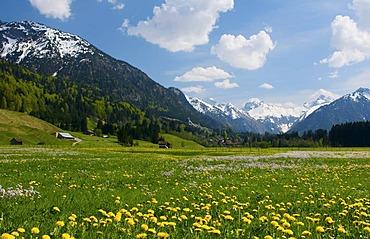 View towards Oberstdorf and the Allgaeu Alps, Allgaeu, Bavaria, Germany, Europe