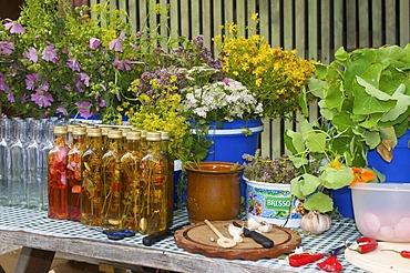 Making of herbal oil in the farm museum in Wolfegg, Upper Swabia, Allgaeu, Baden-Wuerttemberg, Germany, Europe