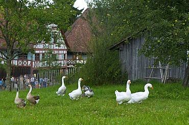 Farm museum in Wolfegg, Upper Swabia, Allgaeu, Baden-Wuerttemberg, Germany, Europe