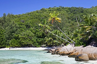 Coconut palms (Cocos nucifera) and granite rocks at Anse Cocos, La Digue island, Seychelles, Africa, Indian Ocean