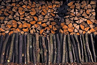Stacked firewood, beech (Fagus sylvatica)