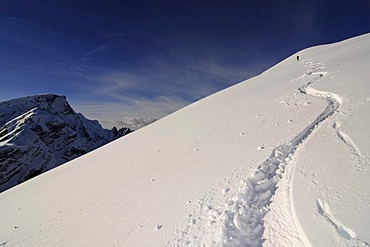 Ski Tour, Mt. Grosser Jaufen, Pragser Tal, Hochpustertal, South Tyrol, Italy, Europe