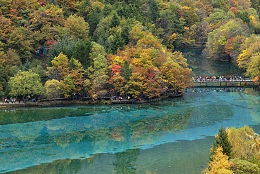 Autumn mood and reflections of trees at the turquoise Five Colour Lake in which dead trees are lying, Jiuzhaigou Valley, Jiuzhaigou National Park, Sichuan, China, Asia