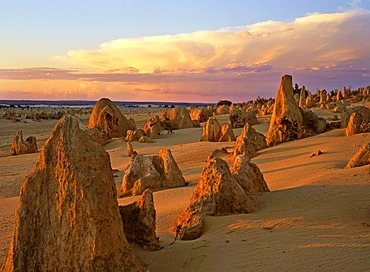 Pinnacles, limestone formations, sunset, Nambung National Park, Western Australia