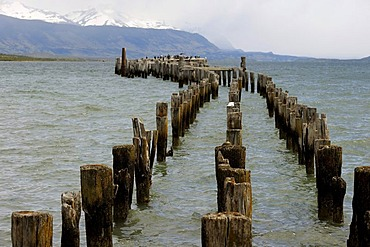 Wood piles in a lake, Patagonia, Chile, South America