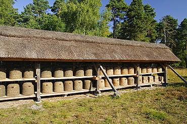Traditional bee fence at Undeloh, Lueneburg Heath Nature Park, Lower Saxony, Germany, Europe