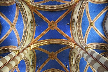Vaulted ceiling, Duomo san Lorenzo, Alba, Provincia Cuneo, Piemont, Piedmont, Italy, Europe