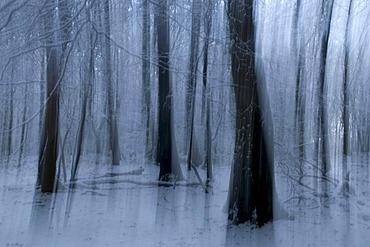 Winter forest in Kamen, Ruhr area, North Rhine-Westphalia, Germany, Europe