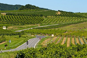 Country road through the vineyards of Baden near Vienna, Lower Austria, Austria, Europe