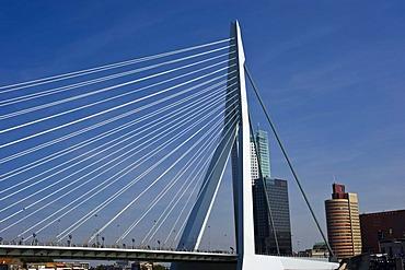 Erasmus Bridge, Rotterdam, South Holland, Holland, Netherlands, Europe