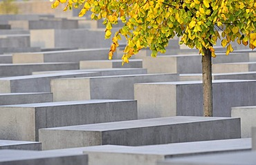 Tree with autumn foliage in the memorial to the murdered jews of Europe, Holocaust memorial, Berlin, Germany