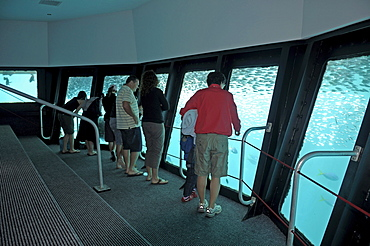 Tourists in an underwater observation chamber on a diving station, Great Barrier Reef, Australia