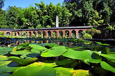 Botanic Gardens, Giardini di Villa Taranto, Verbania, Lake Maggiore, Piedmont, Italy, Europe