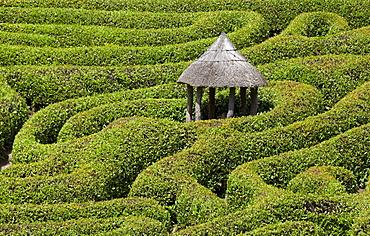 Maze Glendurgan Garden, Falmouth, Cornwall, England, United Kingdom, Europe