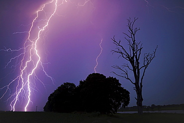 Lightning striking the ground, trees next to a dead tree