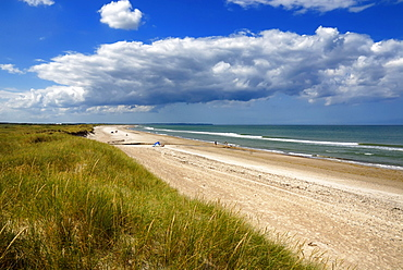 Wall dunes, natural beach and the North Sea, Kollerup beach, Jammer Bay, North West Jutland, Denmark, Europe