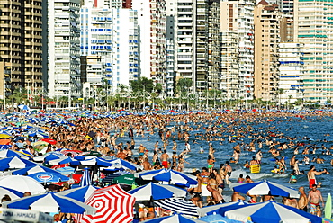 Tourists crowding Benidorm's Playa Levante beach during the main tourist season, Costa Blanca, Spain, Europe