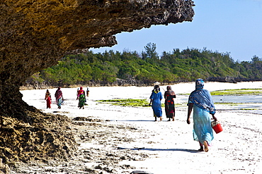 Women carry their caught fish in buckets, Zanzibar, Tanzania, Africa
