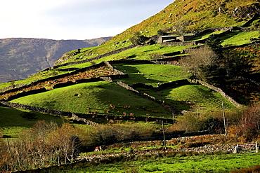 Stone wall fences and farmland, Republic of Ireland, Europe