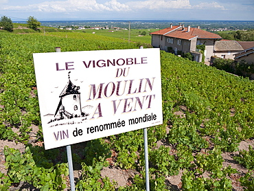 Sign advertising a vineyard for the renowned Beaujolais wine, Moulin a Vent, Romaneche-Thorins, Beaujolais, Rhone departement, France, Europe