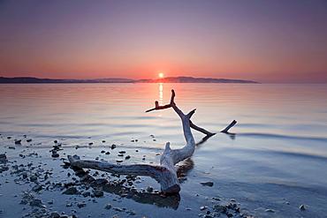 Flotsam, morning mood on the German shore of Lake Constance in Dingelsdorf, Baden-Wuerttemberg, Germany, Europe