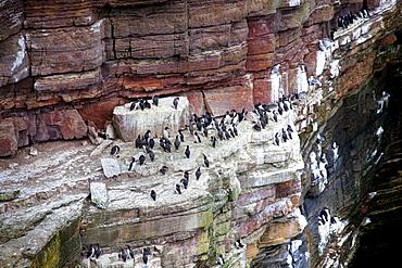 Breeding area for many birds on the North Sea coast in Scotland, United Kingdom, Europe