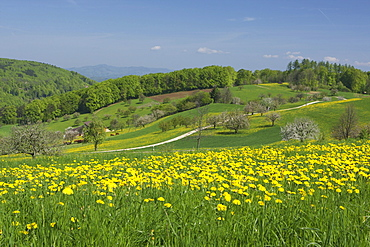 Spring landscape in Baselbiet, Basel-Country, Switzerland, Europe