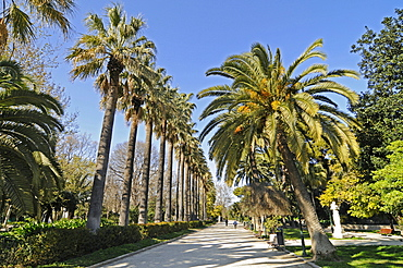 Jardines del Real, public park, gardens, palm-lined avenue, Valencia, Spain, Europe