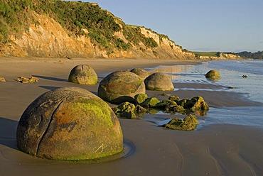 Moeraki Boulders in soft morning light, New Zealand