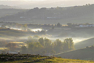 The landscape of Andalusia in soft morning light seen from Ronda, Spain, Europe