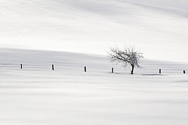 Single tree in a snowy landscape