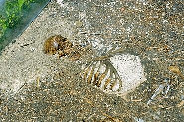 Burial ground near Ischl, Archaeologischer Rundweg archeologic trail, Seebruck on the Chiemsee lake, Upper Bavaria, Germany, Europe