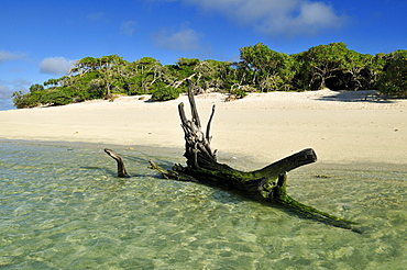 Driftwood on a sandy beach of Heron Island, Capricornia Cays National Park, Great Barrier Reef, Queensland, Australia