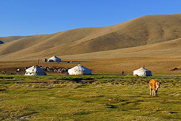 Nomad yurts in the Mongolian steppe, Aimak Bayan Ulgi, Altai Mountains, Mongolia, Asia