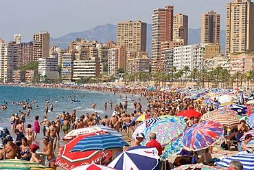 Beach, PlayaPoniente, tourist hotspot, Benidorm, Costa Blanca, Spain