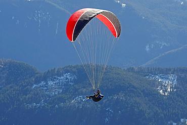 Paraglider on Mt. Brauneck, Lenggries, Upper Bavaria, Bavaria, Germany, Europe,