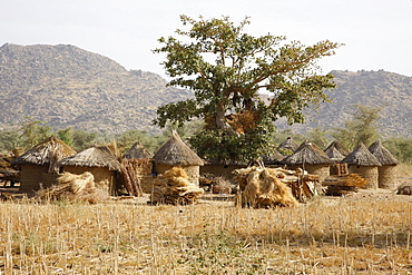 Village with round huts near Mora, Cameroon, Africa