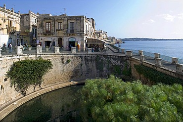 The Fonte Aretusa spring with papyrus plants, Syracuse, Sicily, Italy