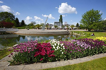 Tulipan, tulips bloom in the Kalenderplatz square, Britzer Garten park in Berlin, Germany, Europe