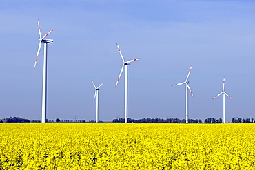 Wind turbines in canola field (Brassica napus), renewable energy